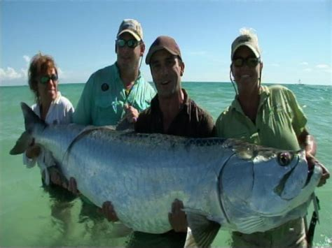 News: Tarpon may finally become catch and release only