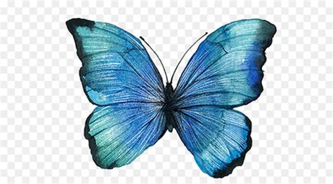 Graphic design - blue butterfly png download - 652*500
