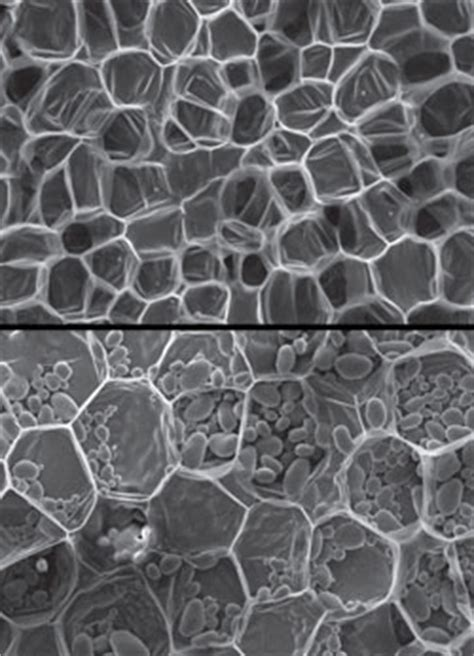 Microstructures of Plants May Lead to New Bio-Inspired