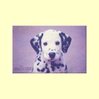 Dalmatian Puppy -- Wrapped Canvas