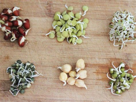 Gallery: How to Grow Bean Sprouts in a Jar | Serious Eats