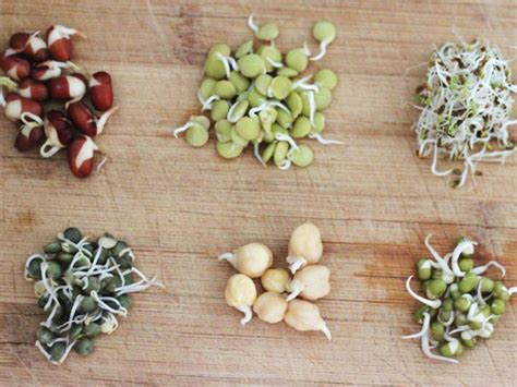 Slide Show | How to Grow Bean Sprouts in a Jar | Serious Eats