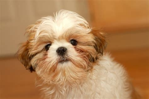 Coughing in Dogs • MSPCA-Angell